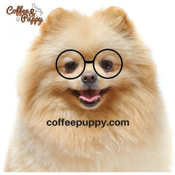 02-tids-shop-promo-coffeepuppy