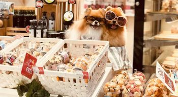 cake-for-dogs-featured