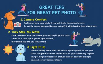 tips-for-pet-photo-featured
