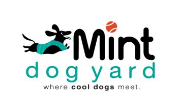 mint-dogyard-featured-img