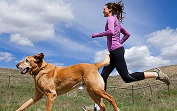 dogs-excercise-featured