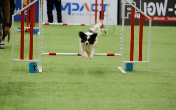 dog-jumping-featured
